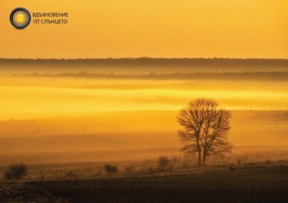 """3. Адриан Атанасов, """"Ранно утро и едно дърво"""""""
